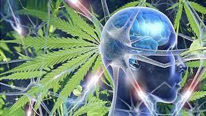 L'utilizzo della cannabis nella demenza